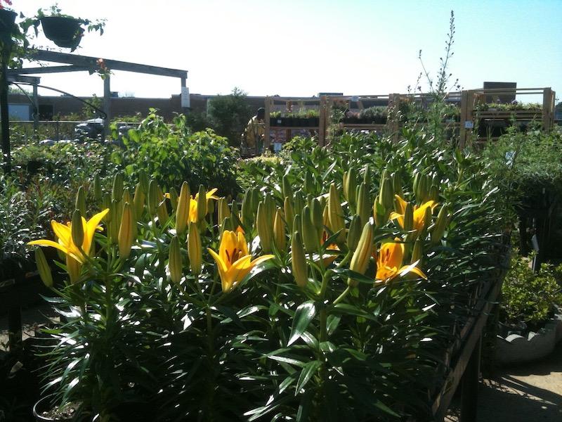 Hutto S Home And Garden Green, Garden Center Jackson Ms